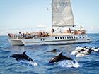 Trip Super Catamaran Coast and Dolphins