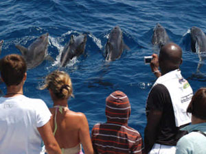 Exclusive Glass Bottom Dolphin Excursion